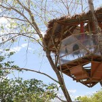 Best Treehouse in the World