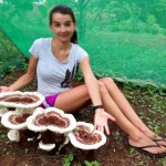 Huge mushrooms with girl