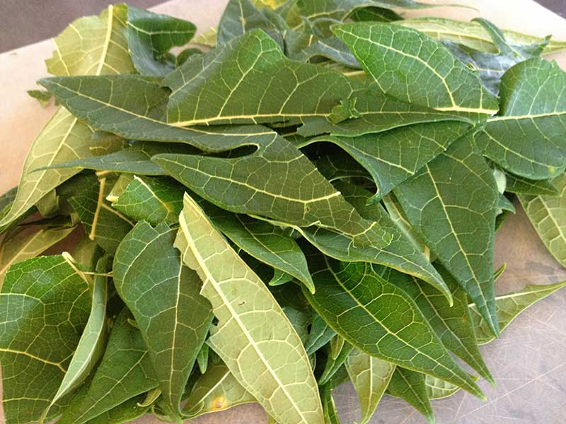 how to make papaya leaf juice for cancer