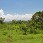 Costa Rica Organic Farm Lot for Sale