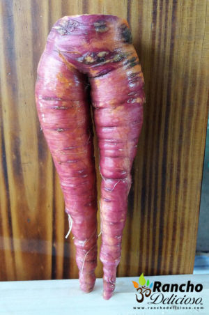 The World's Sexiest Carrot