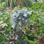 Polyculture with Sweet Potato Invasion