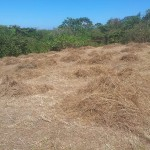 Tons of Dried Grass