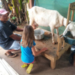 Why is Goat's Milk a Healthier Form of Dairy?