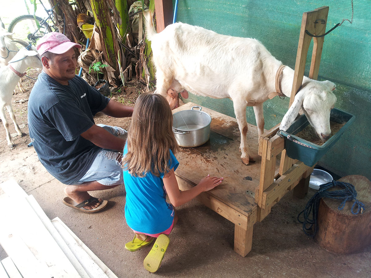 Why goat milk is healthier than cow milk