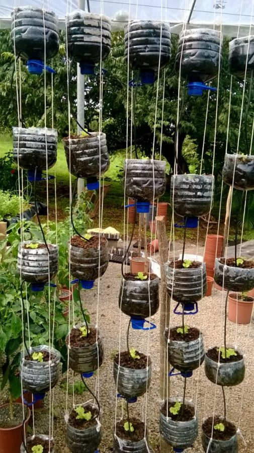 Vertical hydroponics garden made from recycled water bottles.