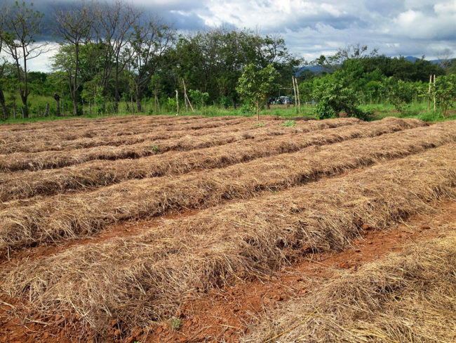 Mulched Bed Farming