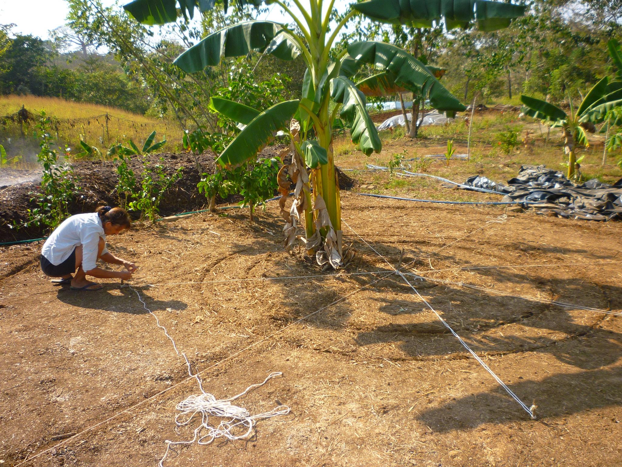 Making An Herb Garden The Design Part Ii