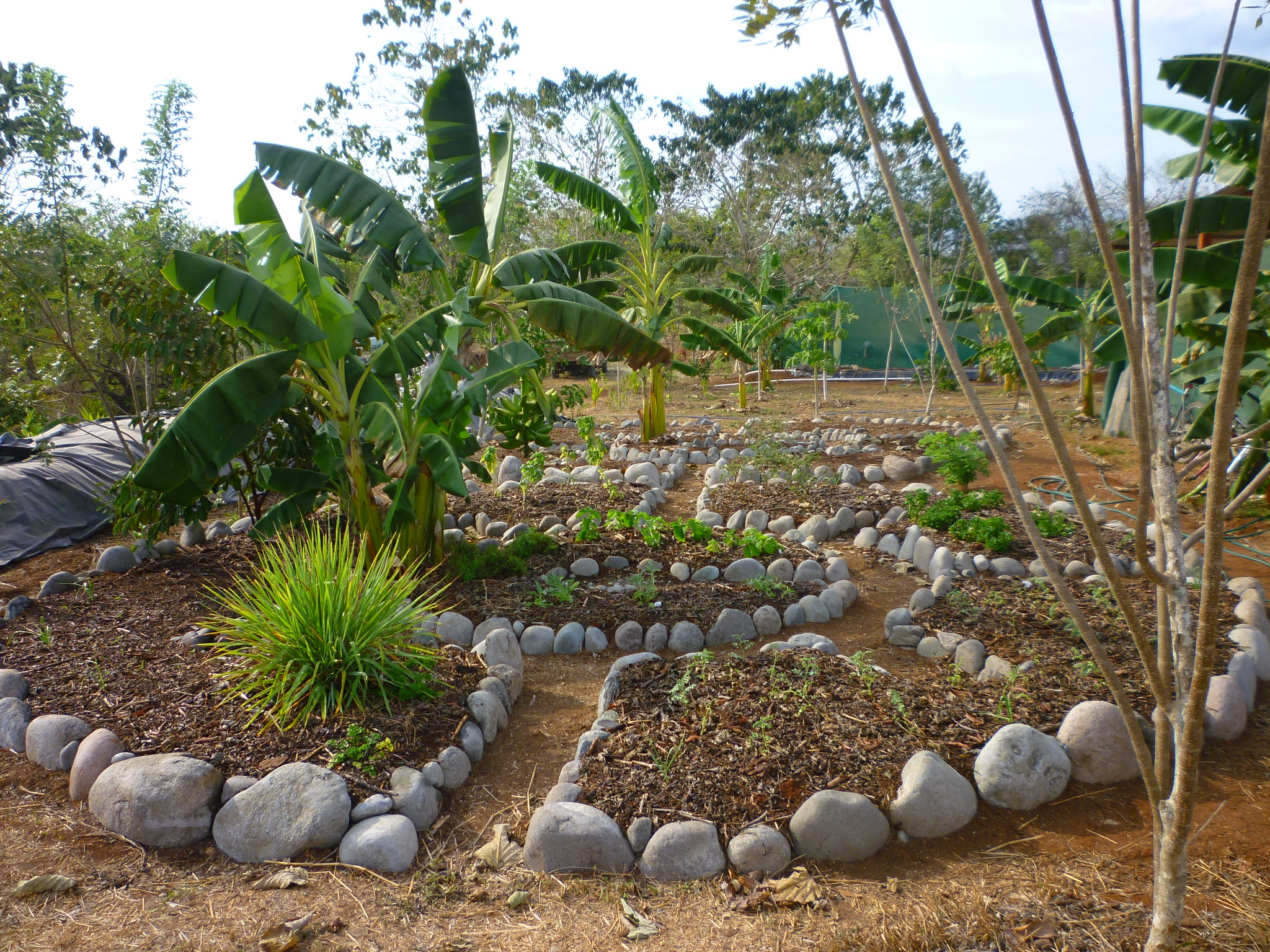 Mandala Keyhole Herb Garden